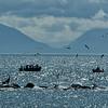 Alaska  July 23 2014  040