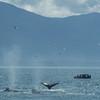 Alaska  July 23 2014  039