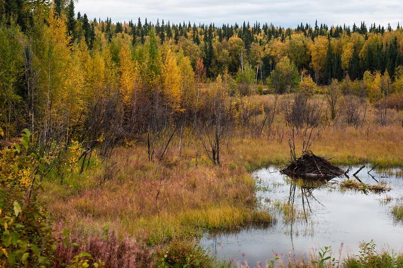 Beaver Pond in Autumn