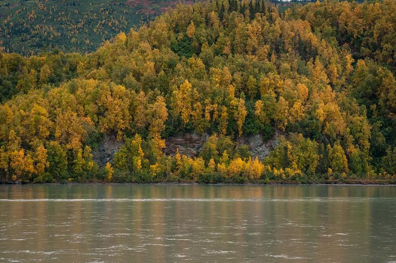 Knik River Foliage