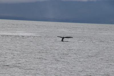 Whales and Alaska_4133