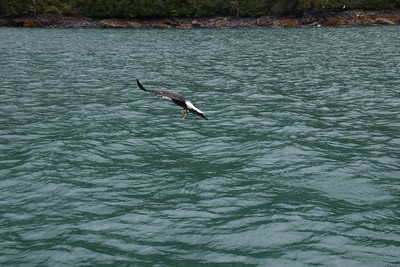 Whales and Alaska_3300