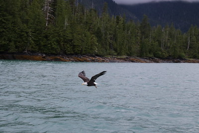 Whales and Alaska_3290