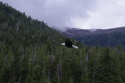 Whales and Alaska_3240