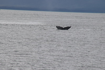 Whales and Alaska_4143