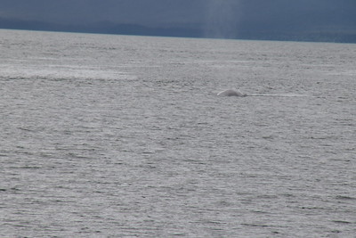 Whales and Alaska_4124