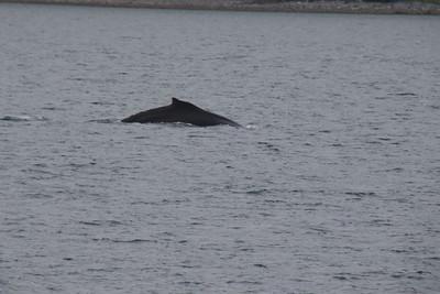 Whales and Alaska_3911