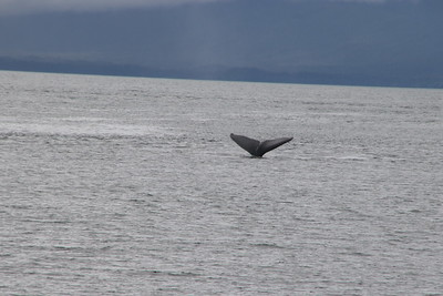 Whales and Alaska_4142