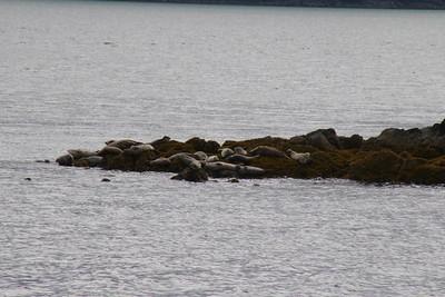 Whales and Alaska_3860