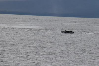 Whales and Alaska_4135