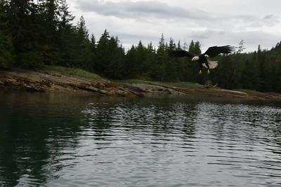 Whales and Alaska_3565