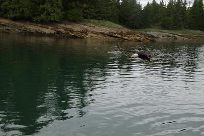 Whales and Alaska_3566