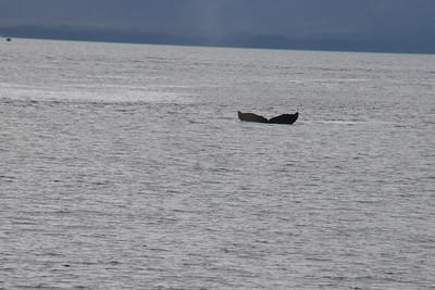 Whales and Alaska_4139