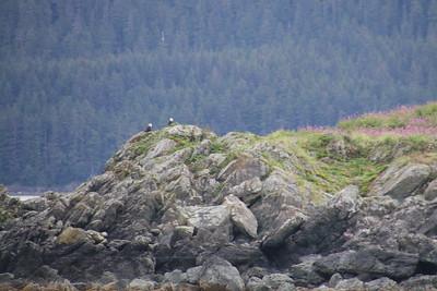 Whales and Alaska_3779