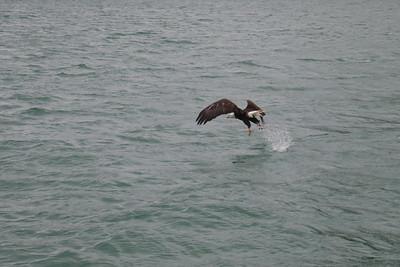 Whales and Alaska_3420