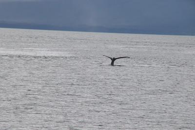 Whales and Alaska_4144