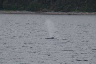 Whales and Alaska_3899