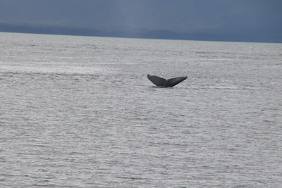 Whales and Alaska_4138