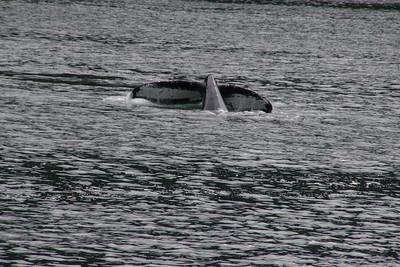Whales and Alaska_4272