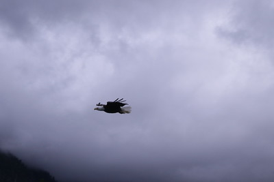 Whales and Alaska_3232
