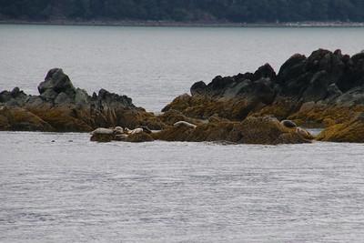 Whales and Alaska_3807