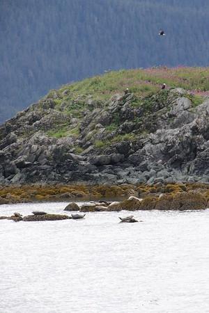 Whales and Alaska_3847