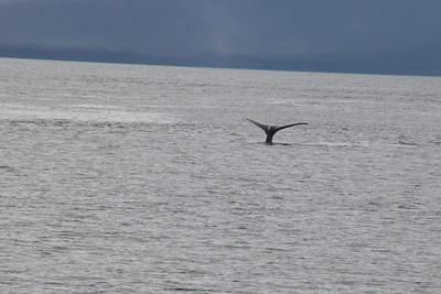 Whales and Alaska_4145