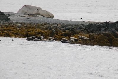 Whales and Alaska_3835