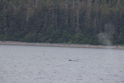 Whales and Alaska_3866