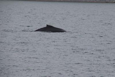 Whales and Alaska_3915