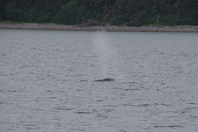 Whales and Alaska_3900