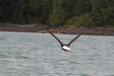 Whales and Alaska_3427