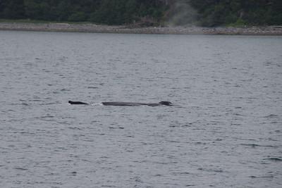 Whales and Alaska_3894