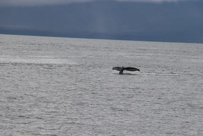 Whales and Alaska_4132
