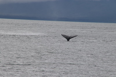 Whales and Alaska_4146