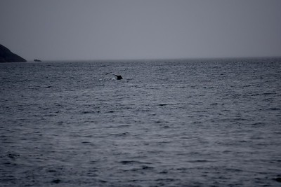 As close as we got to a whale ...