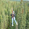 photo courtesy of Denali Park Zip-Line