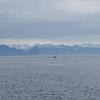 Kenai Fjords-025