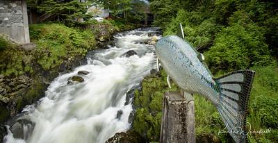 Alaska2017-Ketchikan-8