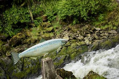 Alaska2017-Ketchikan-9