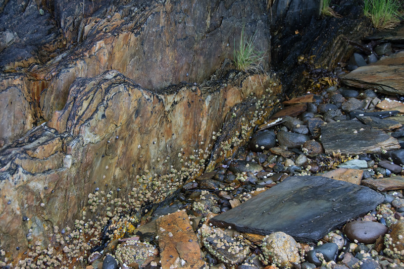 Slate & pebbles.  No name cove, Tracy arm, Alaska.  2017