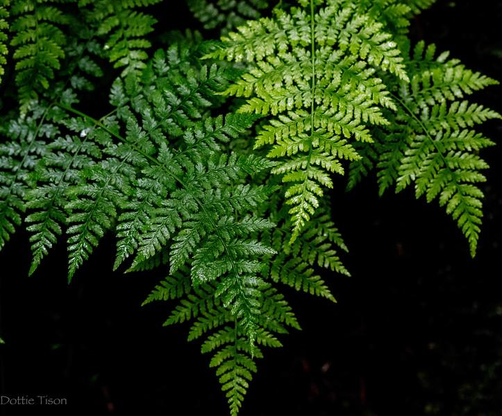 Rain forrest ferns