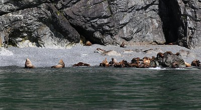 We spend some time enjoying a colony of sea lions.  It was essentially nonstop bickering with the big bulls trying to protect their harems and the younger ones trying to press any advantage they could get.