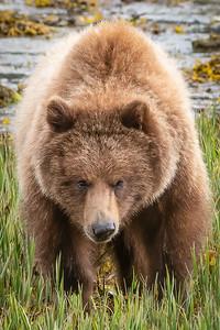 My first bear of the season.