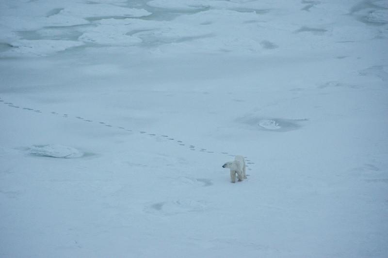long lonely walk