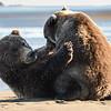 Crimps & cubs nursing