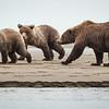 cubs steals salmon . . . again!