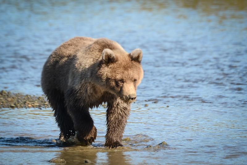 Crimp's cub along river