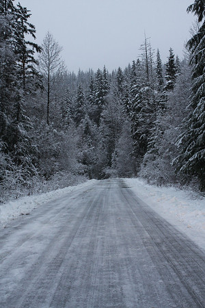 On the road to our cabin on Mosquito Lake Road.