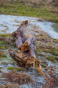 Driftwood - Mendenhall Glacier - Juneau Alaska